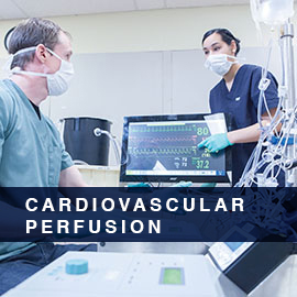 Cardiovascular Perfusion
