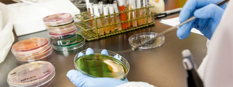 Medical Laboratory Program