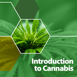 Introduction to Cannabis