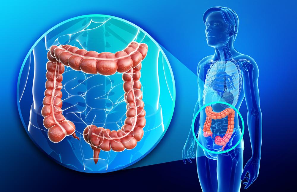 colon image